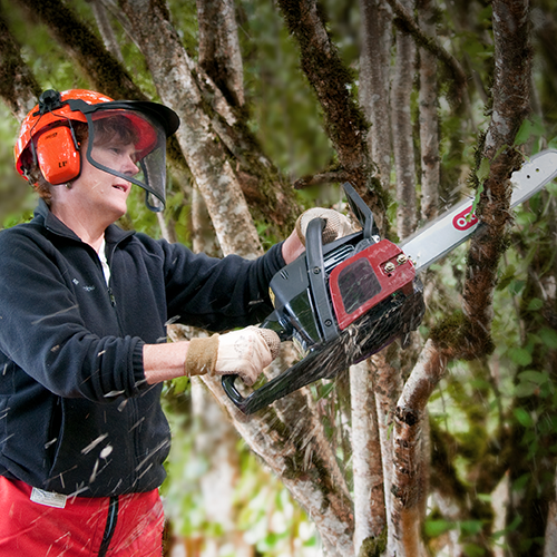 Forestry & Tree Care