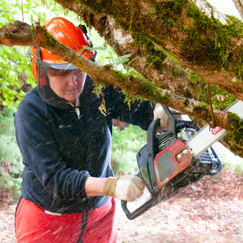 Woman sawing a tree limb with a Single Rivet Guide Bar